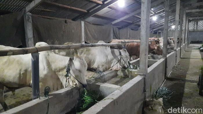protokol-kesehatan-bagi-pemotongan-hewan-ternak-1_169